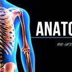 Design – Anatomy