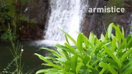 Week 3 – Armistice